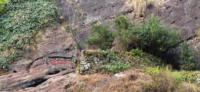 在武夷山,喝到的岩茶都是大红袍吗